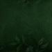 garoafa verde.jpg